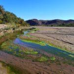 Rzeka w Oazie Fint Południowe Maroko