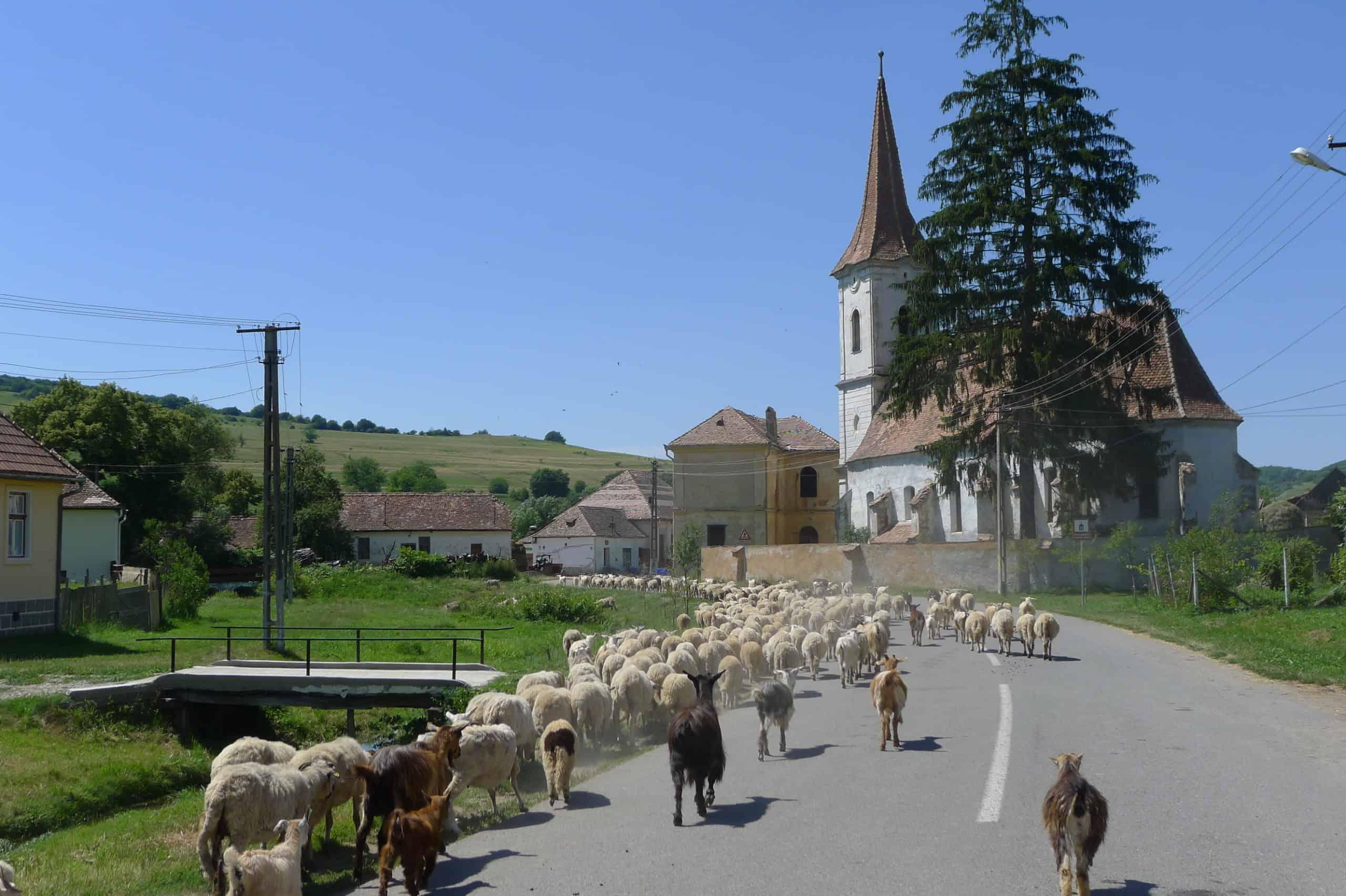 Transylwania, wieś Cund