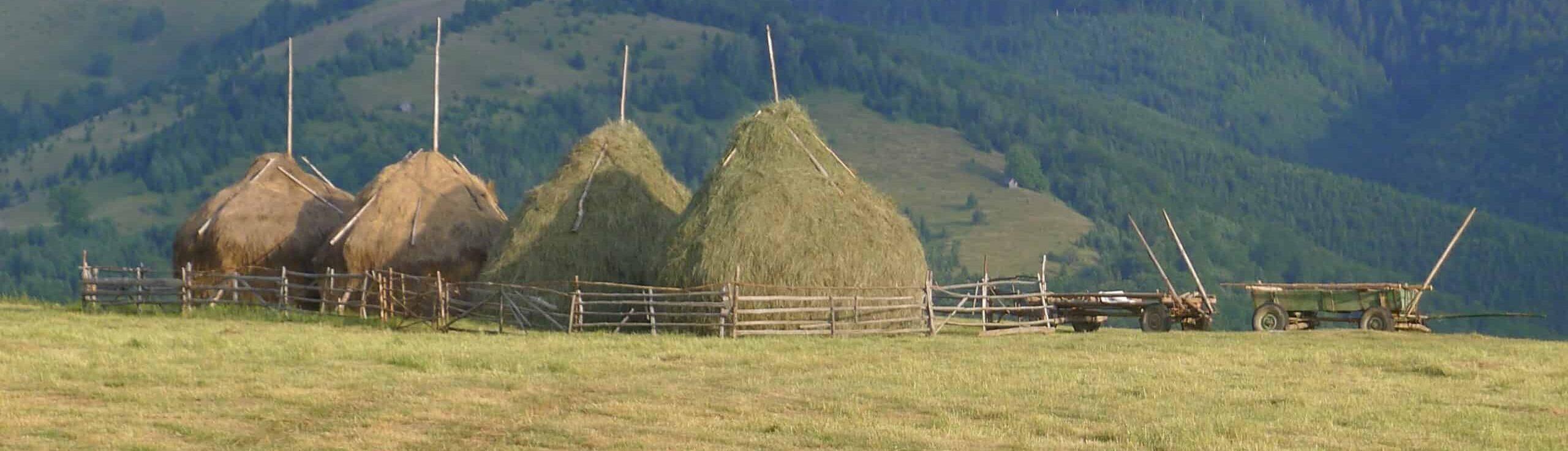 Stogi siana, Transylwania