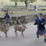 Dziewczynka uciekająca przed jeleniami Nara Japonia