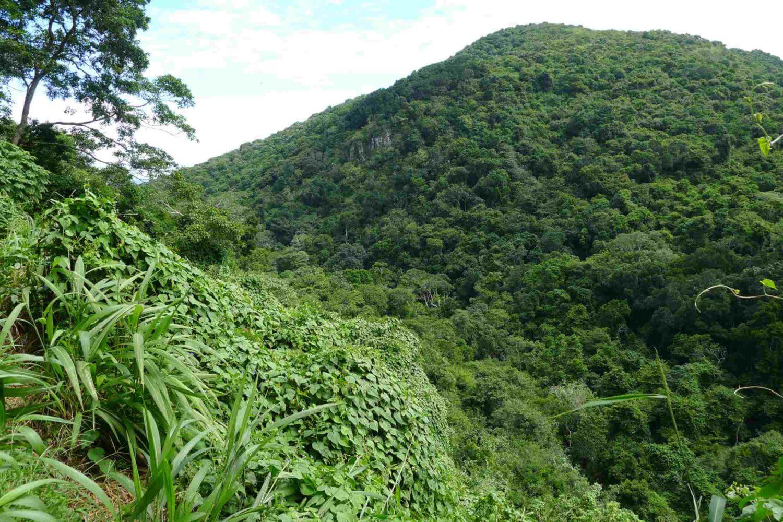 Dżungla Dzikie Wybrzeże