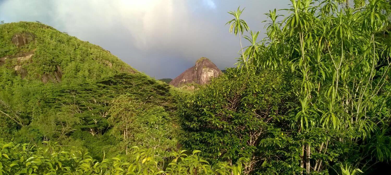 Droga do Anse Royal na północy Mahe