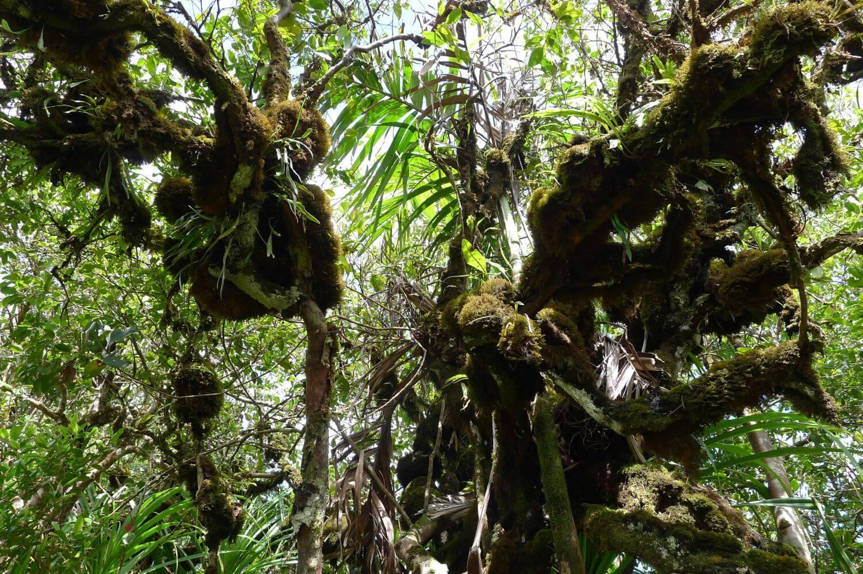 Dżungla na wyspie Mahe, Seszele