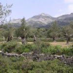 Interior Naxos, Cyklady