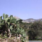 Kaktusy na Naxos, Cyklady