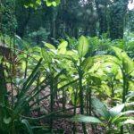 Ogród Botaniczny, Victoria, Seszele
