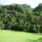 Burta zieleni w Ogrodzie Botanicznym w Victorii