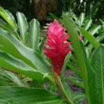 Kwitnące roślny w Ogrodzie Botanicznym, Seszele