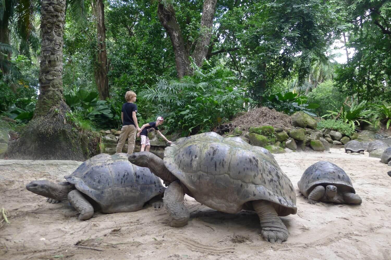 Grupa żółwi w Parku Botanicznym, Victoria Seszele